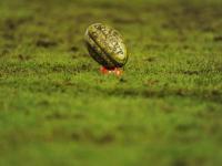 Rugby, tutti i risultati delle abruzzesi